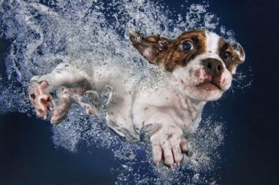 puppy swimming1