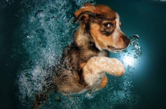 puppy swimming2