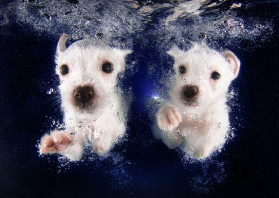 puppy swimming3