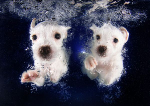 puppy swimming3