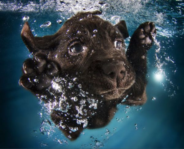 puppy swimming4